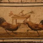 combattimenti di galli, collezione sant angelo