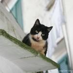 Gatto di Amalfi