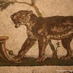 pantera, mosaico, collezione sant angelo