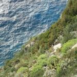 Capri, certosa di san Giacomo